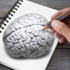 Hand drawing a brain